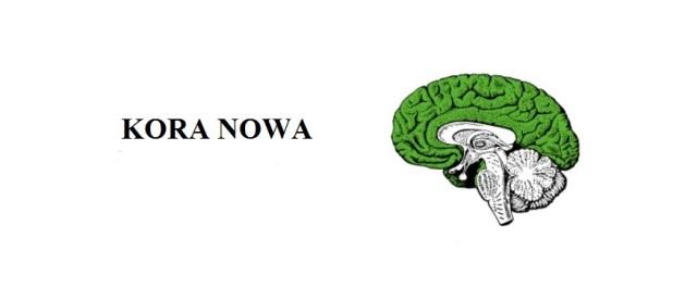 KORA NOWA (2)